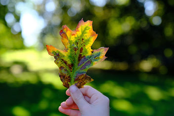 Signs of Autumn - Free image #388573