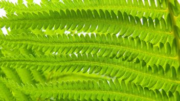 Green Fern - image #388613 gratis