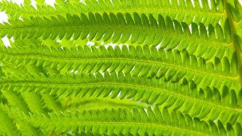 Green Fern - Free image #388613