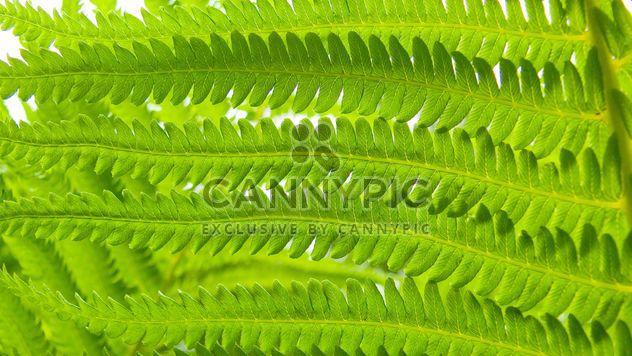 Зеленый папоротник - бесплатный image #388613