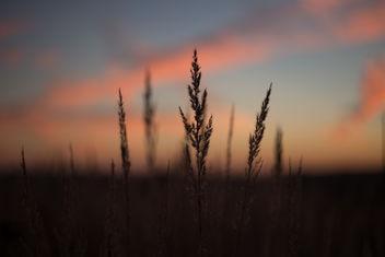 Blades of wild grass - image #388703 gratis