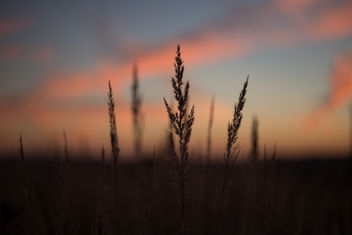 Blades of wild grass - image gratuit(e) #388703