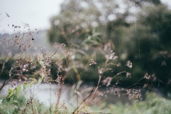 Rain - Free image #389363