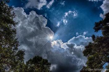 My Florida - Free image #389503