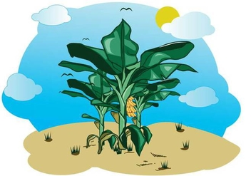 Free Banana Tree Illustration - бесплатный vector #390663