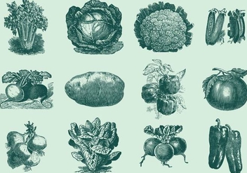 Vintage Vegetables - vector #391823 gratis