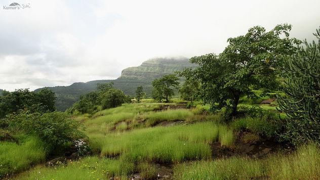 Green Folders All Across West Ghats - Free image #392743