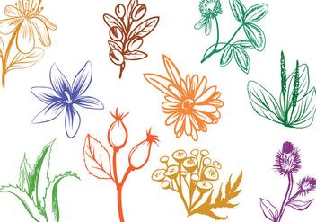 Free Cosmetics Herbs Vectors - vector #393183 gratis