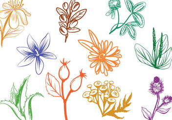 Free Cosmetics Herbs Vectors - Free vector #393183