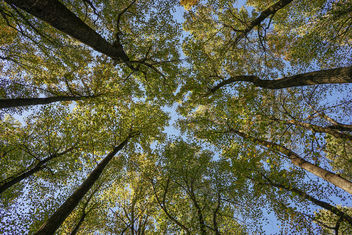 Looking up - Kostenloses image #395143