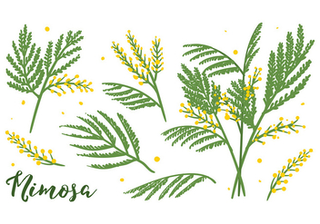 Mimosa Flower Vector - Free vector #395253