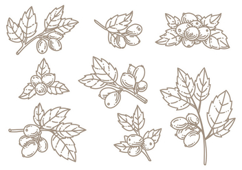 Rosehip Doodle Vector - Kostenloses vector #396223