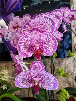 Orchids - бесплатный image #396233