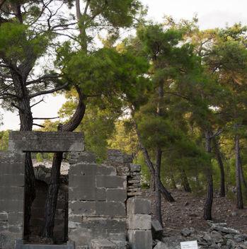 trees - image #397733 gratis