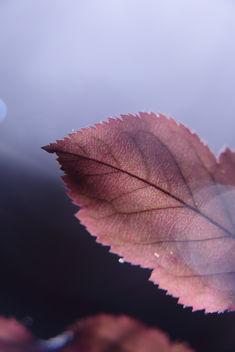 Autumn Silver - Free image #397763