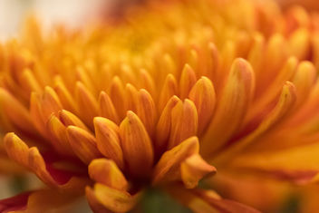 Dreamy orange ... - Free image #403493
