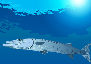 Barracuda Swimming In The Sea - vector gratuit #407693
