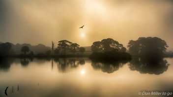 Foggy Rookery - image #408243 gratis