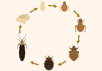 Free Bed Bug Life Cycle Vector - Free vector #410963