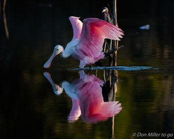 Mirror, Mirror - Kostenloses image #413293
