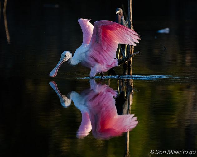 Mirror, Mirror - Free image #413293