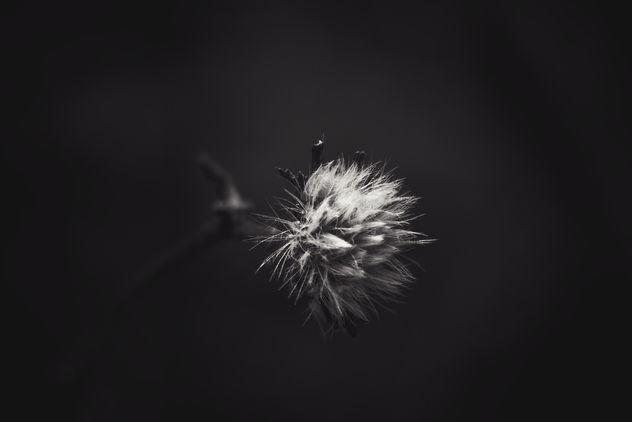 instant d'hiver3 - image gratuit #414153