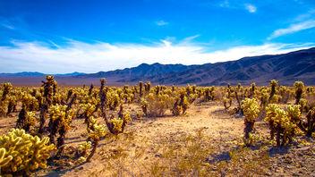 Cholla Cactus Garden - image #414573 gratis