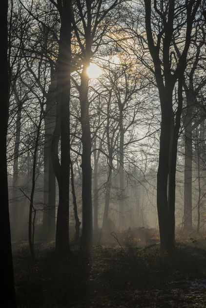 Forest atmosphere - Free image #414603