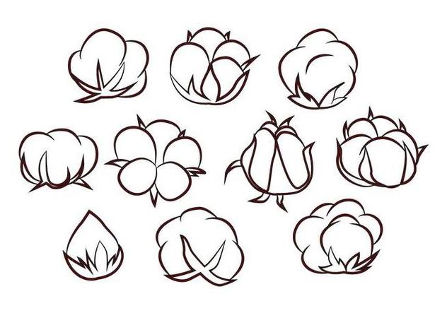 Free Cotton Flower Vector - vector #414953 gratis
