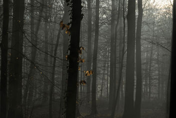 Catching the light - бесплатный image #415243