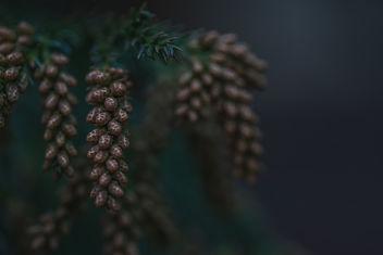 Winter Vibes - Free image #415313
