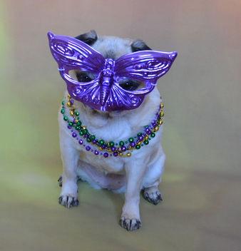 Mardi Gras Pug - Free image #417213