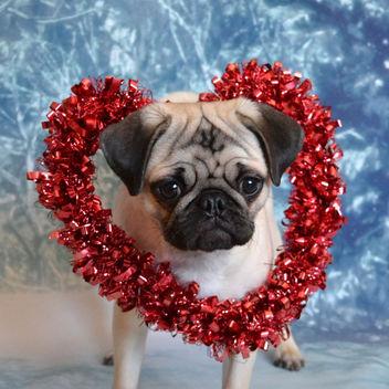 My Boo Valentine! - image #417753 gratis