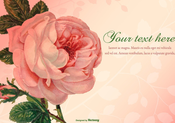 Beautiful Vintage Rose Illustration - Free vector #424183