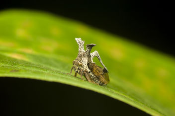 Little plant hopper with crown - image #424513 gratis