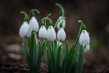 Hello Spring - image gratuit #424813