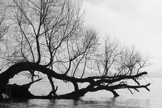Black and White - Kostenloses image #426753