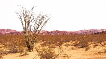 Desert Concept - image gratuit #426983