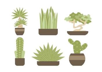 Free Evergreen Houseplant Vectors - Free vector #427073