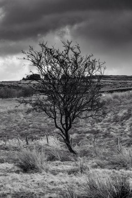 Lonely tree - image #427543 gratis