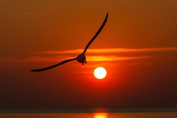 Seagull flying at sunset - Free image #136353