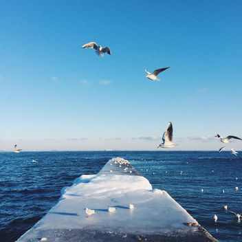 Seagulls flying over pier - бесплатный image #136373