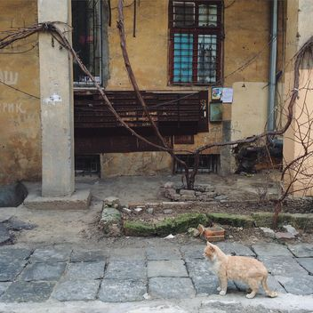 Homeless cat in street - Free image #136443