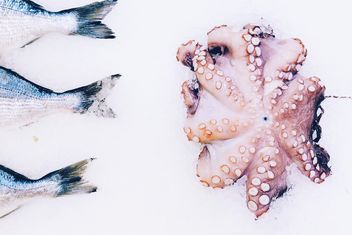 Fresh fish and octopus - image #136483 gratis