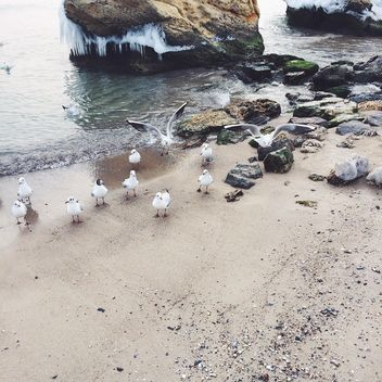 Seagulls on sea coast - image #136543 gratis