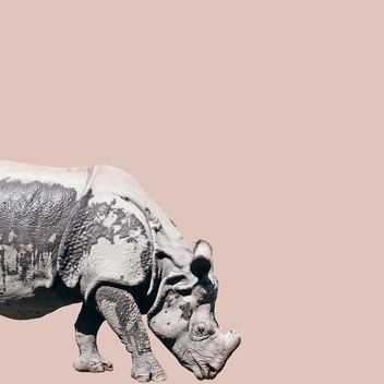 Rhino isolated on pink background - image gratuit #136613