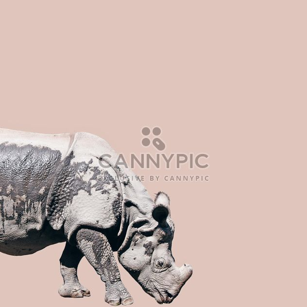Rhino isolated on pink background - Free image #136613
