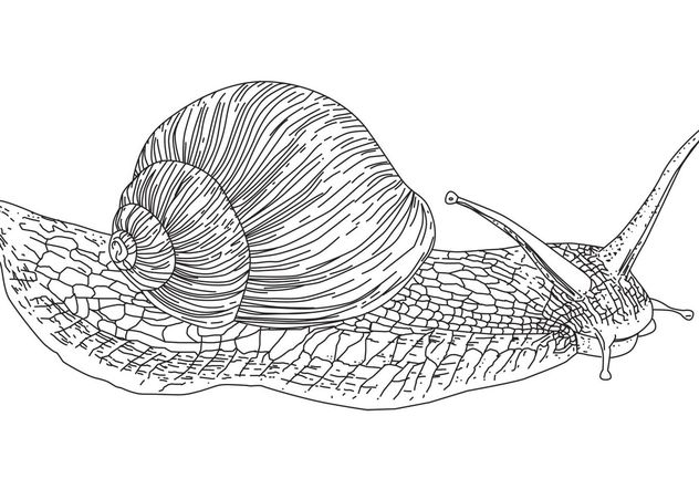 escargot de vecteur - vector gratuit #139613