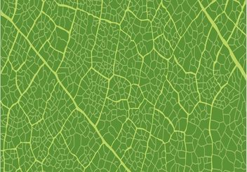 Leaf Pattern - Free vector #144713