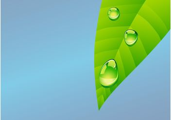 Leaf With Dew - vector gratuit #145593